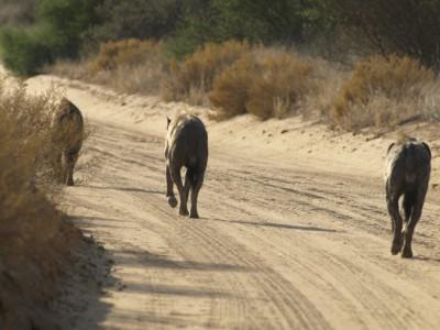 Tres hienas nos salen al encuentro