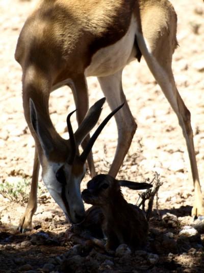 acaba de nacer un bebe en el Kalahari