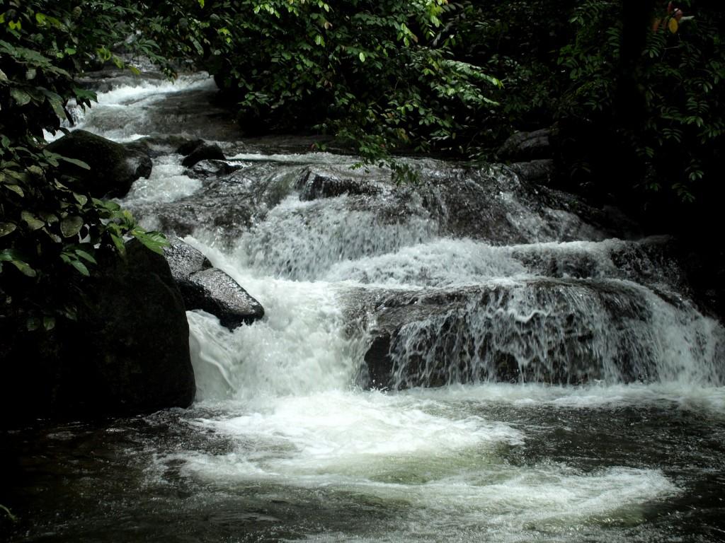 Río en la reserva