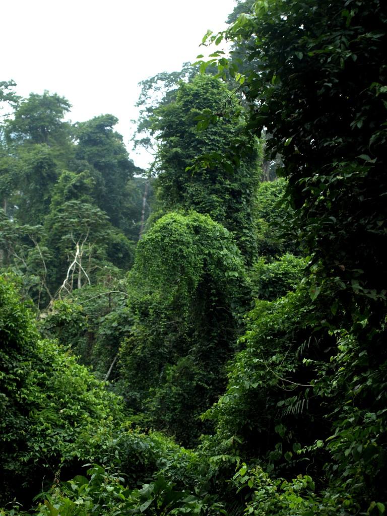La selva en la reserva