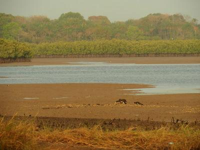 El río Cacheu en Cachungo