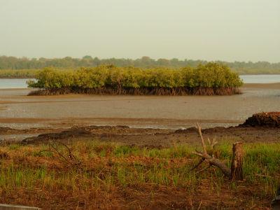 Los bosques al descubierto del río Cacheu