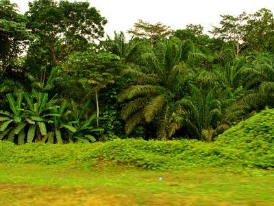 Un paisaje en Guinea Ecuatorial
