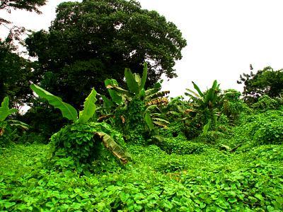 La selva ecuatorial en Guinea