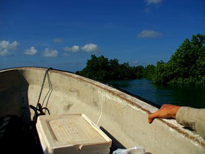 Navegando hacia Ivo
