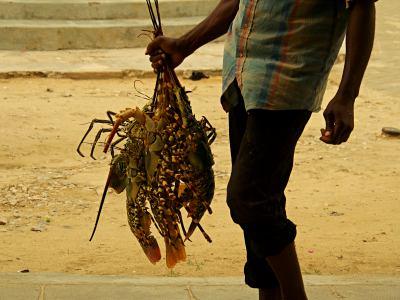 Langostas en la Isla de Mozambique