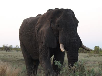 El Kruger esta lleno de elefantes