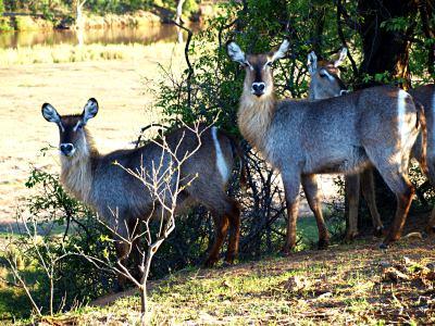 Fantástico Kruger y su fauna