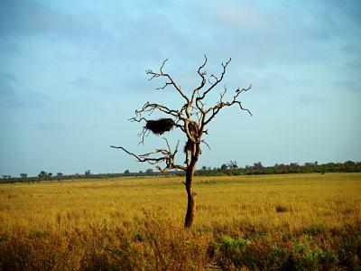 La maravilla de los árboles del Kruger