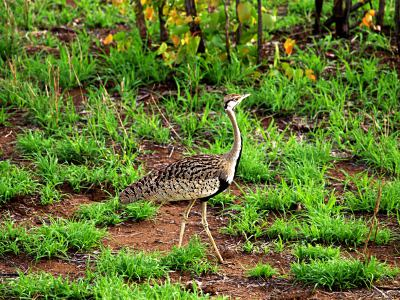 Animales en el Kruger