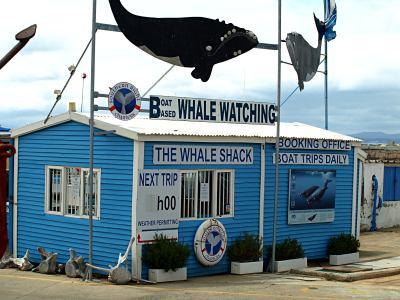 En cualquier sitio de la costa hay ballenas