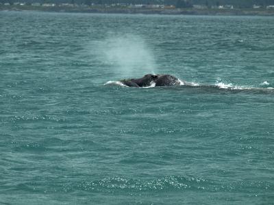 Ballenas desde un barco
