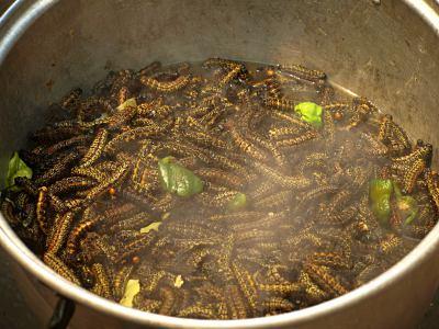 Gusanos negruzcos, manjar de Kinshasa