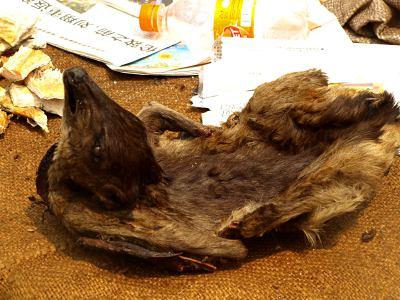 Una rata de la selva lista para comer en Le Grand Marche