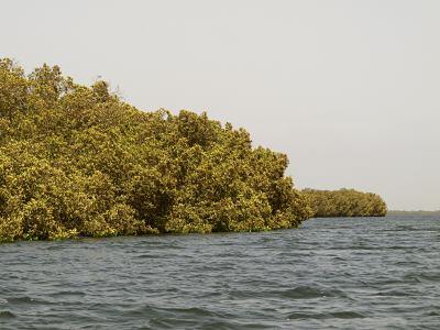 Navegando por los manglares
