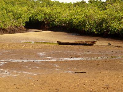 Una piragua entre los manglares