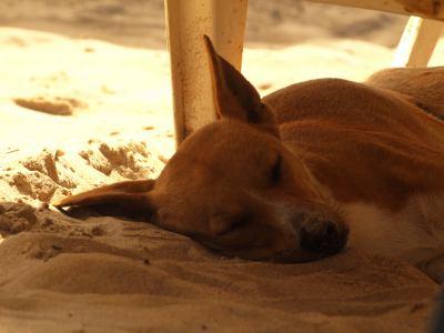 Perro a la salida resort en Gambia