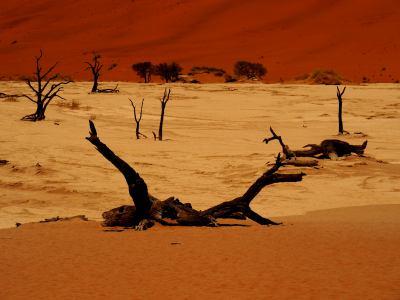 Fantásticos lagos de sal en el Desierto de Namib