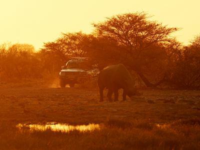 Un rino en Ethosa