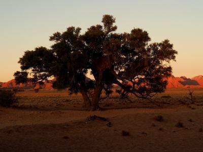 La entrada del Desierto de Namib