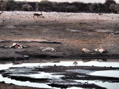 Durmiendo tras el festín en Ethosa