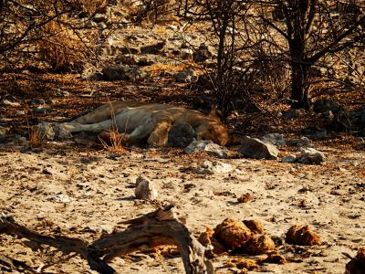 Durmiendo a la fresca en Ethosa