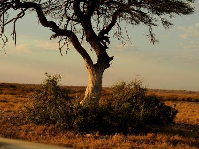 Árbol de los leones de Ethosa