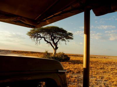 Safari durante el día en Ethosa