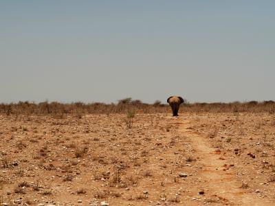 Un elefante se pierde en la inmensidad de Ethosa