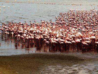 Wallis Bay lleno de flamencos por todas partes