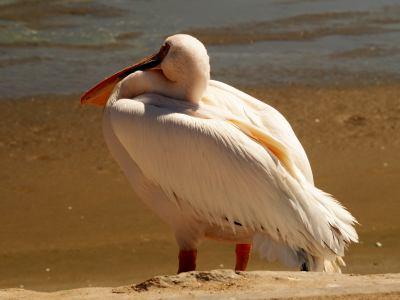 Aves migratorias en Walvis Bay