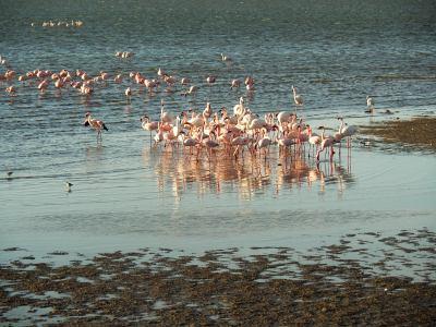 Es una locura los flamencos de Walvis Bay