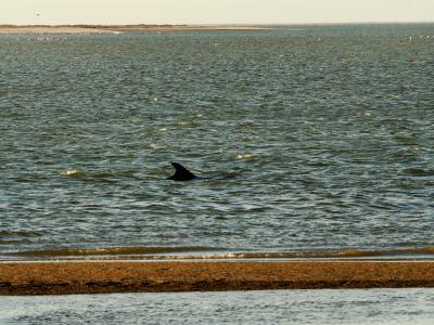 Tiburón en nuestras narices en Walvis Bay