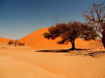 El Desierto de Namib que es fantástico