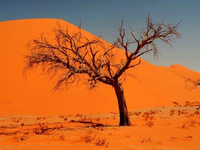 El Desierto de Namib es fantástico