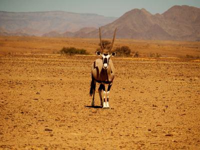Animales por todas partes en el Desierto de Namib