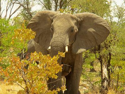Botswana el paraíso