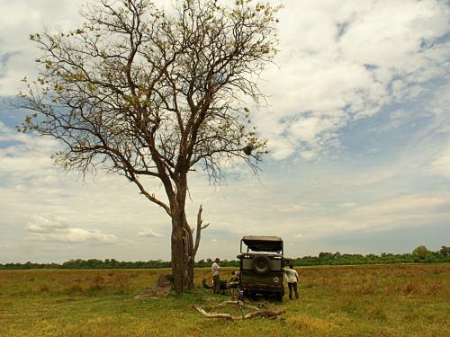 Paramos al pie de un viejo árbol en la sabana