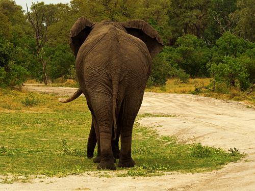 Un elefante atraviesa nuestro campamento