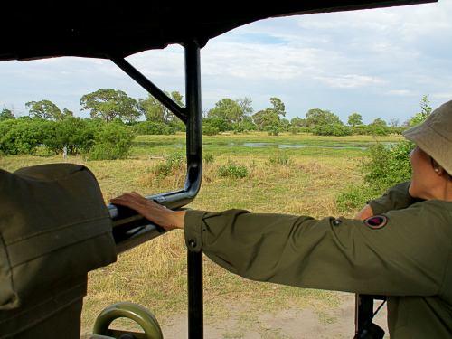 Safari en la Reserva de Moremi