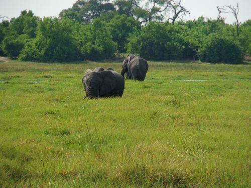 Unos elefantes cerca de nuestras tiendas