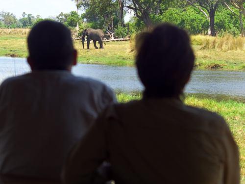 Mis amigos en la terraza observando elefantes