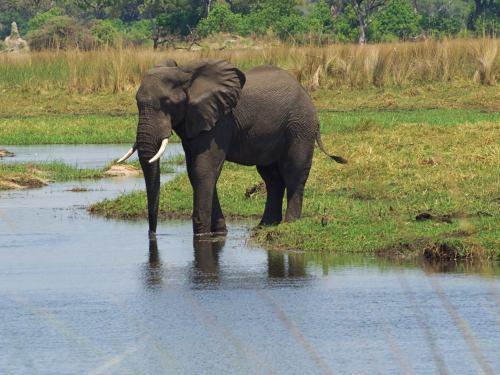 Un elefante nos sale al paso