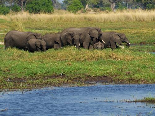 Grupo de elefantes en el Delta del Okavango