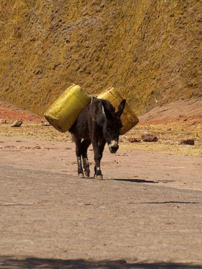 Un burro por las calles de Lalibela
