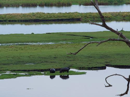 Río Chobe en el Parque Nacional Chobe