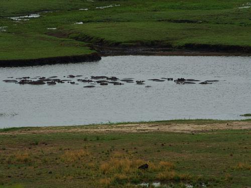 Concentración de hipos en Chobe