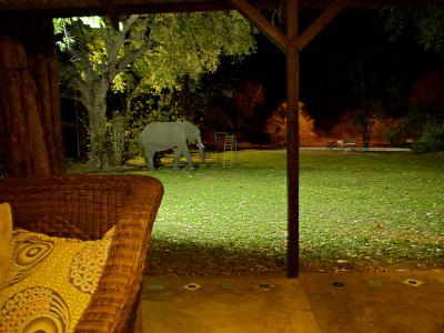 Un elefante campeando por Tiger Safari