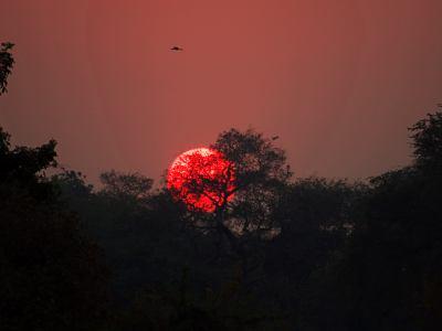 Amanecer en la selva del Zambeze
