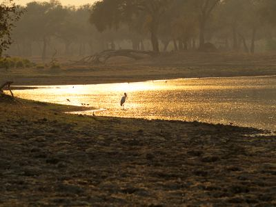 Una mare de Mana Pools National Park